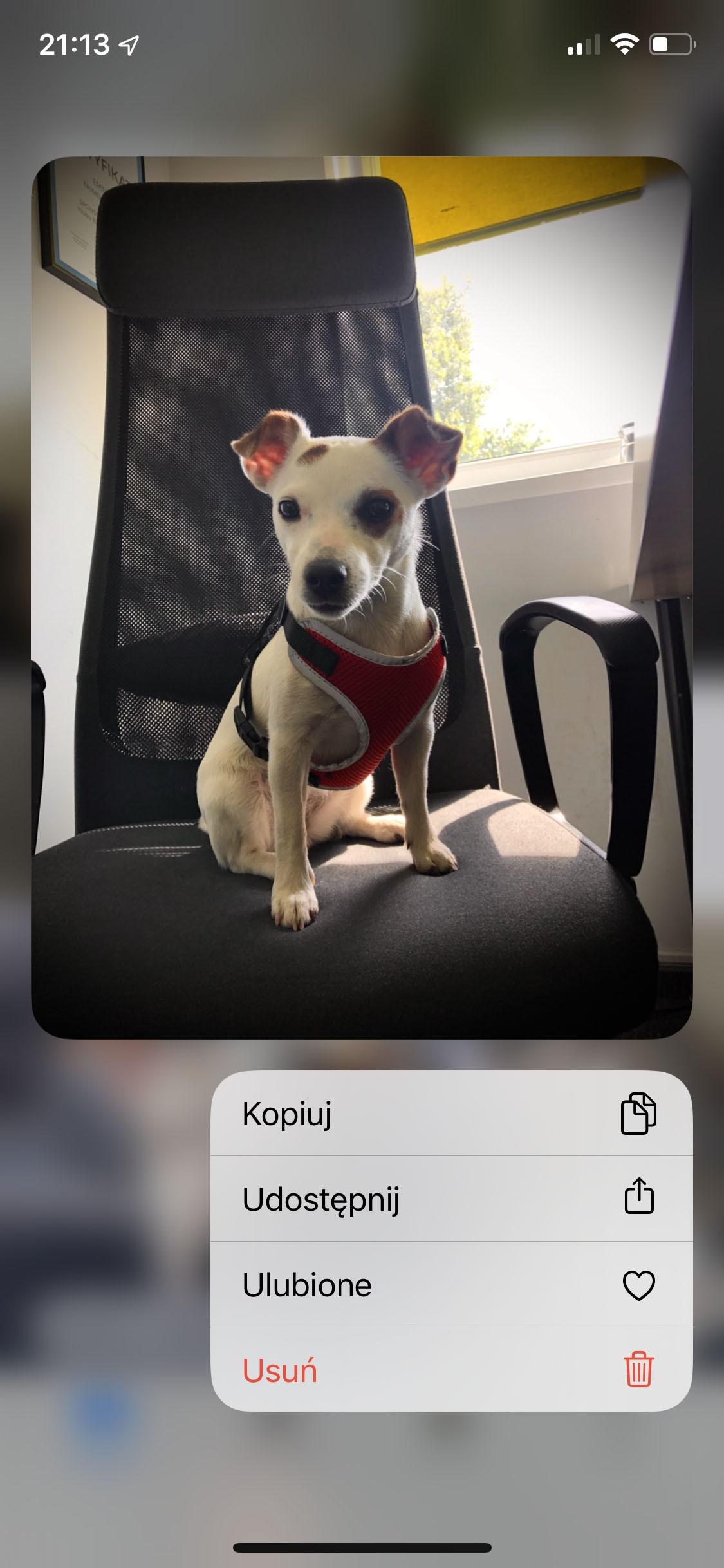 iOS 13 - Zdjęcia